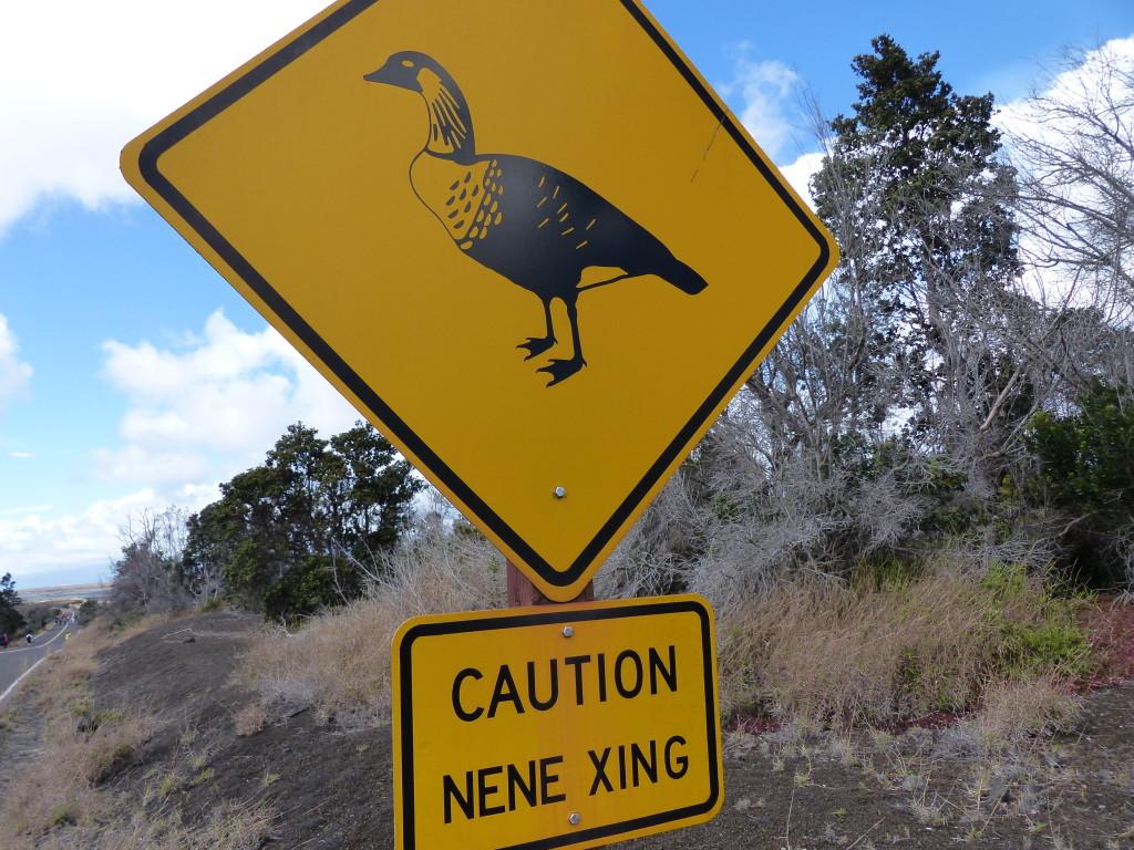 皆さん、このハワイにある道路標識をご存知ですか?実は、この道路標識はハワイ限定道路標識です。ネネというハワイの州の鳥専用の道路標識なんです。
